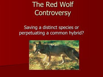 Red Wolf Controversy - DB Server Test Page