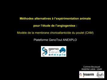 Méthodes alternatives à l'expérimentation animale pour l'étude de l ...