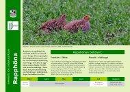 Rapphöna - Sveriges Ornitologiska Förening