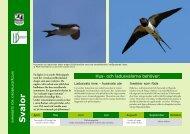 Svalor - Sveriges Ornitologiska Förening