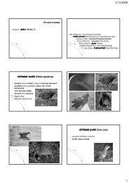 Cvičení ptáci 2 - KZR