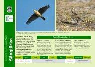 Sånglärka - Sveriges Ornitologiska Förening