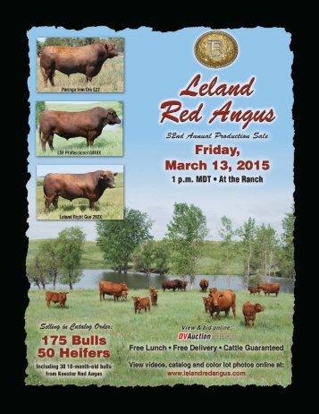 Leland - Koester Red Angus Sale Catalog 2015