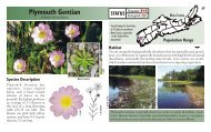 Plymouth Gentian - Species at Risk