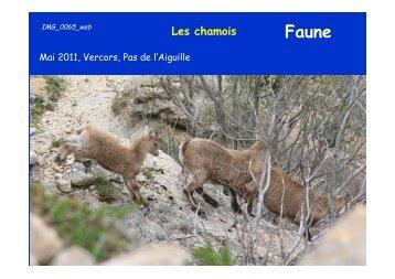 Les chamois - Jean-Louis Negre