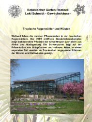 Loki - Botanischer Garten - Universität Rostock