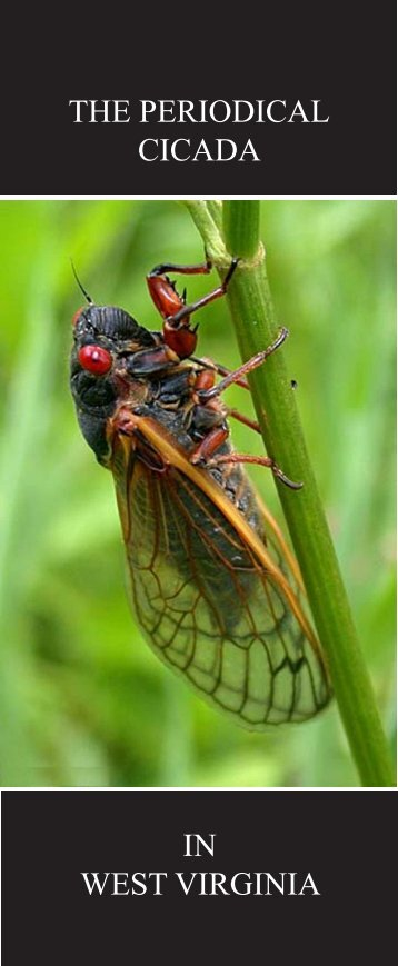 THE PERIODICAL CICADA - West Virginia Department of Agriculture