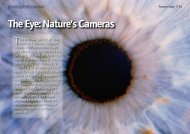 The Eye: Nature's Cameras - Science Photo Library