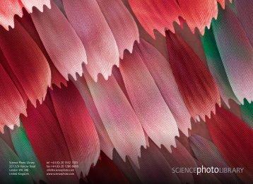 Company brochure (pdf) - Science Photo Library