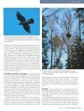 Kanakull vajab metsarahu - Page 4