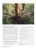 Kanakull vajab metsarahu - Page 7