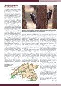Siit - Eesti ornitoloogiaühing - Page 3