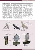 Siit - Eesti ornitoloogiaühing - Page 5