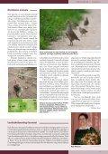 Loe Tiirutajat! - Eesti ornitoloogiaühing - Page 3