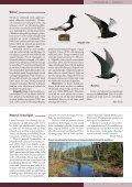 Loe Tiirutajat! - Eesti ornitoloogiaühing - Page 5