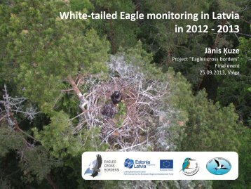 White-tailed Eagle monitoring in Latvia in 2012 - 2013 Jānis Ķuze