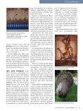 Rahvuslinnu lugu - Page 2