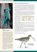 Intensiivne põllumajandus ohustab linde - Eesti ornitoloogiaühing - Page 2