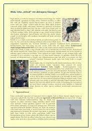 """Mida teha """"leitud"""" või abivajava linnuga? - Eesti ornitoloogiaühing"""