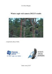 Winter eagle web camera 2012/13 results