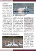 Loe Tiirutajat siit. - Eesti ornitoloogiaühing - Page 4