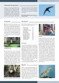 Tiirutaja nr. 14 - Eesti ornitoloogiaühing - Page 3