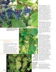 Marju kandvad, varju andvad veiniväädid - Page 2
