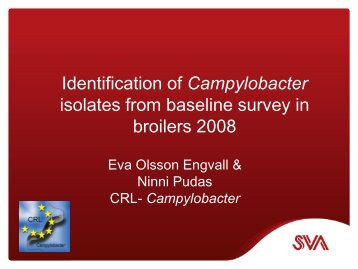 Identification of Campylobacter isolates from baseline survey ... - SVA