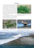 Dienvidkurzemes piekraste - Piekrastes biotopu aizsardzība un ... - Page 5