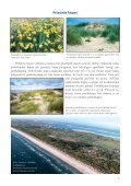 Dienvidkurzemes piekraste - Piekrastes biotopu aizsardzība un ... - Page 7