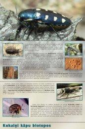 Kukaiņi kāpu biotopos - Piekrastes biotopu aizsardzība un ...