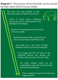 Diagram 1. The process of how laminitis can - Arabian Horse Source