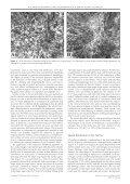View - Dipartimento di Studi Geologici e Ambientali - Università ... - Page 7