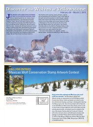 View our fall 2012 wolf newsletter now - New Mexico Wilderness ...
