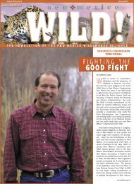 FIGHTING THE GOOD FIGHT - New Mexico Wilderness Alliance