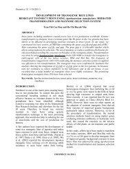 DEVELOPMENT OF TRANSGENIC RICE LINES RESISTANT TO ...