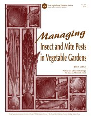 Managing Insect and Mite Pests in Vegetable Gardens