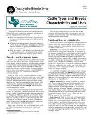 Cattle Types and Breeds Characteristics and Uses