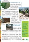 Production durable de charbon de bois en République ... - Cirad - Page 2