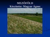 MEZŐFÖLD Készítette: Magyar Ágnes