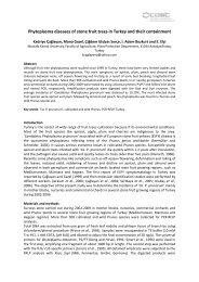 Phytoplasma diseases of stone fr... - IPWG - International ...