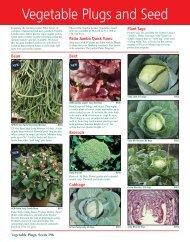 Vegetable Plugs and Seed