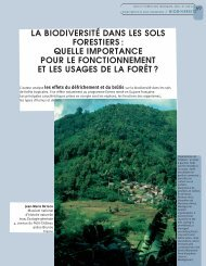 la biodiversité dans les sols forestiers - Bois et forêts des tropiques