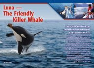 The Killer Whale That Befriended People - ZMAN Magazine
