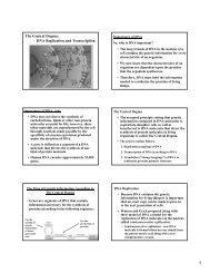 L2 - DNA Replication and Transcription