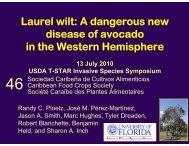 Laurel wilt: A dangerous new disease of avocado in the ... - CEDAF