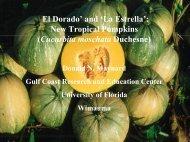 'La Estrella': New tropical pumpkins (Cucurbita moschata) - CEDAF