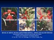 Variabilidad en Sprekelia formosissima (L.) Herbert - CEDAF