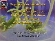 Organogénesis Somática en Papa Solanum tuberosum L ... - CEDAF