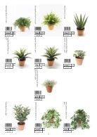 Plants & Pots 2015 old - Page 2